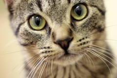Shelter Cats -Volunteering for Local Animal Shelters to Provide Beauty Shots of Rescue Animals