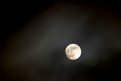 Luna Lu - One of my biggest muses is the moon.